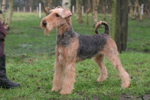 Kennel Spicaway
